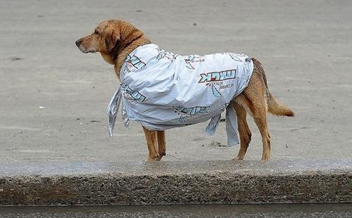 Wasaga 2013 Dog in Blanket